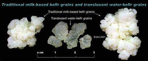Water Kefir - Are You Ready for a Change?