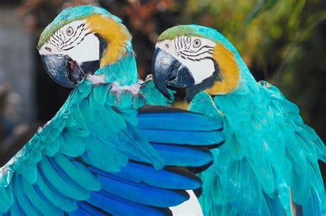 Several Reasons Why Birds Preen Their Feathers - Pets