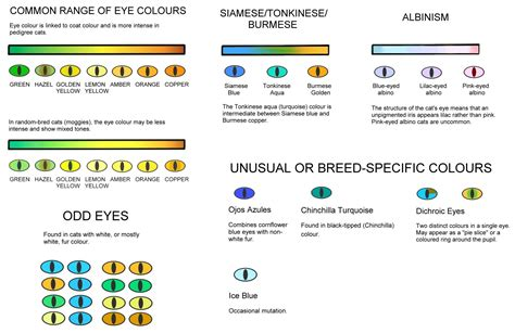 COLOUR AND PATTERN CHARTS (With images) | Cat eye colors