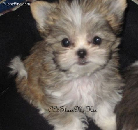 Pin by Tish Brittingham on For ME! | Miki dog, Baby dogs