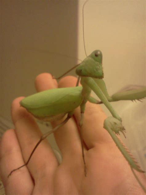 Keeping a Praying Mantis As a Pet - Instructables