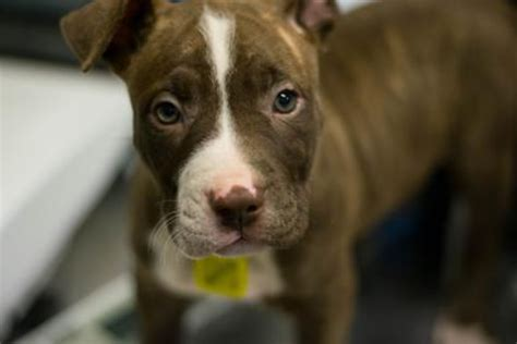 15 Adorable Pups Currently Up for Adoption at the