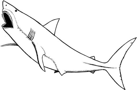Marine Animal Coloring Pages